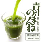 【送料無料】オーガランドの濃い青汁 大麦若葉 食物繊維 難消化性 デキストリン クロロフィル カテキン 30包