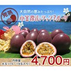 小笠原パッションフルーツ 1.5kg 大玉(16〜19玉入り)