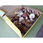(生産者販売) 生しいたけ 群馬県産 500g お徳用(無選別 送料350円〜) 原木 椎茸 しいたけ シイタケ きのこ キノコ