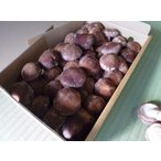 (生産者販売) 生しいたけ 群馬県産 1kg 箱入(並品) 原木 椎茸 しいたけ シイタケ きのこ キノコ