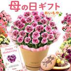 ╩ьд╬╞№е╫еье╝еєе╚ mothersday елб╝е═б╝е╖ечеє е╣едб╝е─ е╒ещеяб╝ еое╒е╚ ╚н┐вди ▓╓д╚е╣едб╝е─ г╡╣ц╚н carnation
