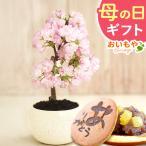 母の日 2021 プレゼント ギフト 花 スイーツ 母の日 花とスイーツ ギフトランキング 盆栽 桜 鉢植え お菓子 和菓子