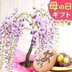 母の日 2021 ギフト 花 スイーツ 母の日 プレゼント 花とスイーツ ギフトランキング 盆栽 藤 鉢植え 花鉢 お菓子 和菓子