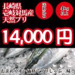 (送料無料)壱岐対馬産 天然寒ブリ4kg以上
