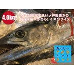 [美味しい魚特選海鮮ギフト]壱岐対馬産 一本釣り【活け〆】鰆(さわら) 1尾4kgサイズ(3....