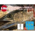 [美味しい魚特選海鮮ギフト]超特大!壱岐対馬産 一本釣り【活け〆】鰆(さわら) 1尾6kgサイズ(5.5kg〜6.5kg)[国産][冷蔵便