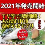 2016年予約開始4.2~4.8kg送料無料!テレビで話題沸騰中!大分県臼杵市養殖 かぼすブリ