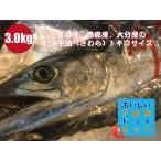 [美味しい魚特選海鮮ギフト]三重県産、徳島産、大分産 釣り鰆(さわら)1尾3.0kg前後[国産][冷蔵便]