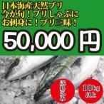 2017年入荷次第発送開始! 10kg以上 日本海産 ブリ(天然ブリ)[生] 1匹(年末到着指...