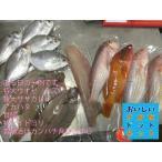 美味しい魚ドットネット厳選10000円セット