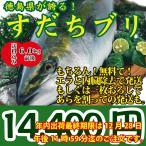 送料無料!話題沸騰!徳島県が誇る!すだちブリ6.0kg前後 御歳暮や贈り物に