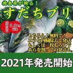 送料無料!話題沸騰!徳島県が誇る!すだちブリ5.0kg前後 御歳暮や贈り物に