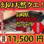 お歳暮や贈答に【長崎県産】鍋の王様天然クエ650g(約