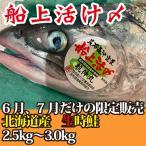 御中元 ギフト 生 船上活け〆 北海道産 時鮭 時知らず トキシラズ 2.5kg-3.0kg