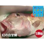 [幻の超高級魚!美味しい魚特選海鮮ギフト]徳島県産 白甘鯛(しらかわ)1尾1kg前後[国産][冷蔵便]