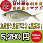 絶品!高級活魚活け締めシマアジ(縞鯵)一尾1.2kg