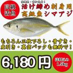 絶品!高級活魚活け締めシマアジ(縞鯵)一尾1.5kg