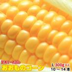 訳あり お試し  とうもろこし 茨城県 トウモロコシ 朝採り おおもの L 300g以上10〜14本 4kg 甘い 美味しいお取り寄せ 産地直送