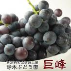 訳あり 巨峰 茨城県  巨峰予約 ぶどう フルーツ 巨峰 種あり 約2kg ご家庭用 ブドウ 葡萄 種あり 甘い 美味しい お取り寄せ 産地直送
