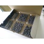 ブルーベリー750g 有機肥料栽培 無農薬 ブルーベリー 冷蔵便