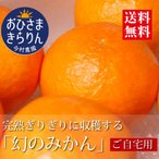 フルーツ おひさまきらりん 【ご家庭用】みかん 清美  美娘オレンジ お歳暮