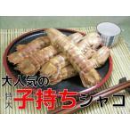 子持殻付特大シャコ500g 蝦蛄