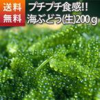 (送料込み)沖縄お土産におすすめ。沖縄県産プチプチ海ぶどう200g(海ブドウ 沖縄  お土産 お中元 ギフト )