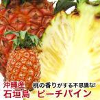 ピーチパイン 石垣島産 沖縄 パイナップル 500g〜800g  安心保証付き