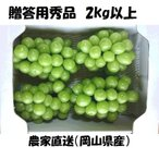 ご予約 シャインマスカット 岡山県産 贈答用秀品 3〜5房 合計2kg以上 露地栽培 農家直送