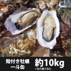 [配送:1月30日〜]牡蠣(かき) 岡山虫明産 殻付き 約100個 (ID-10)