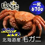 Yahoo Shopping - 毛ガニ 北海道産 約670g 1尾入り ボイル済 ギフト カニ かに 蟹