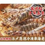蝦子 - 活〆急速冷凍車海老 500g(30~34尾入)御歳暮 お歳暮