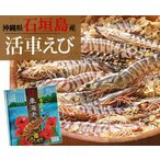 Shrimp - 石垣島活き車エビ1kg26〜33尾