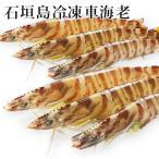Shrimp - 石垣島冷凍車海老500g Lサイズ16〜20尾