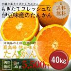 (沖縄みかん) 沖縄県伊豆味産たんかん 40kg