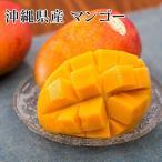 【期間限定】沖縄産完熟アップルマンゴー【ご家庭用】1kg(2〜4個入り)  トロピカルフルーツ 南国フルーツ