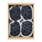 山形県南陽市産 高尾 秀2kg(3〜4房) 巨峰系ぶどう 葡萄 数量限定 種なし