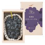 日本の極み 長野県産 ナガノパープル 500g(1房) ぶどう 葡萄 種なし 皮まで リンベル お取り寄せ グルメ
