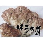 香菇 - 天然 きのこ(国産キノコ) ほうきたけ(ねずみたけ)300g 秋の味覚  山の幸 天然食材 を 産地直送 ギフト対応