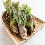 天然 山菜 タラの芽 200g 春の味覚 山の幸 採りたてを 産地直送(会津産 新潟産)