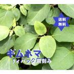 ギムネマ茶500g (ギムネマ・シルベスタ100%) 焙煎TB用刻み茶葉・安価
