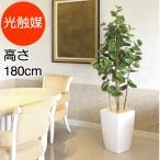 人工植物 高さ180cm アーバンシーグレープ1.8 消臭 抗菌 防汚