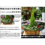 【送料無料】コニファーゴールドクレスト 横長のウッドプランターの季節の寄せ植え♪おまかせピック付き♪