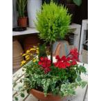 コニファーゴールドクレスト トピアリー(スタンド)仕立て♪テラコッタ陶器鉢♪季節の寄せ植え♪S-サイズ おまかせピック付き♪