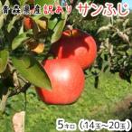 青森りんご 送料無料 訳ありりんごサンふじ5キロ14〜20玉