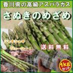 芦笋 - 海のグリーンアスパラガス「さぬきのめざめ」1kgセット(500g×2):25cmカット