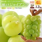 瀬戸ジャイアンツ4L×2房(約1.2kg)岡山産 ぶどう ブドウ 葡萄
