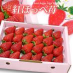 紅ほっぺいちご(約700g 化粧箱)愛媛/徳島産 苺 イチゴ 送料無料