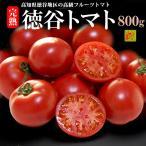 徳谷トマト(約800g)高知産 フルーツトマト 塩トマト 送料無料