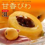 甘香びわ(3-4L/約1kg)長崎産 ビワ 枇杷 ハウス栽培 送料無料